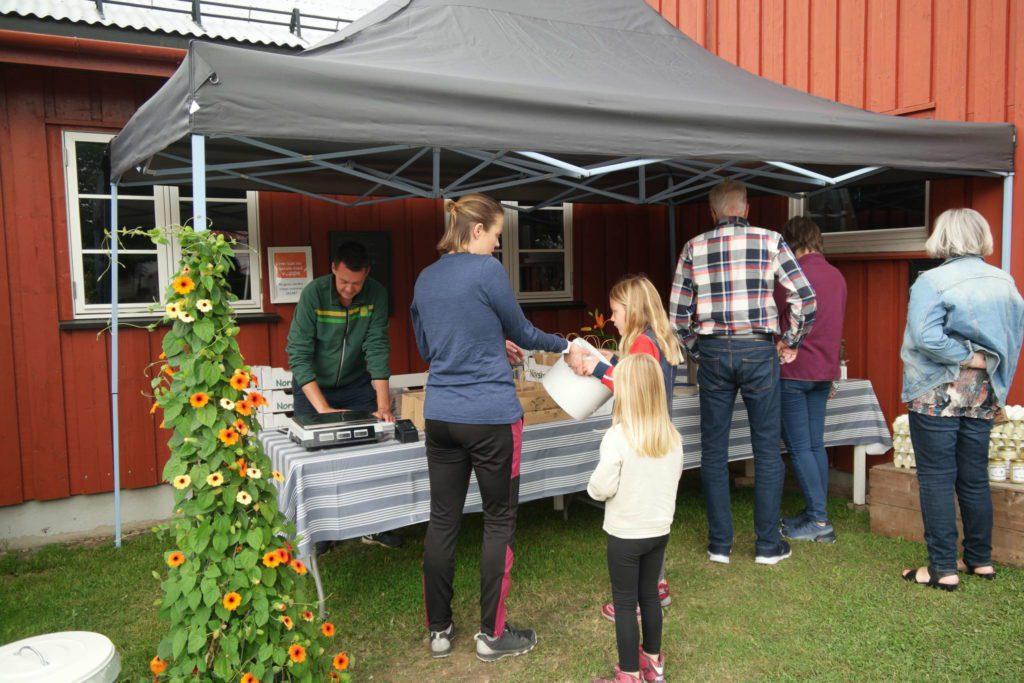 RINGNES GÅRD: De åpne gårdene i Løten hadde i helgen mye besøk. FOTO: Marit Amundsen
