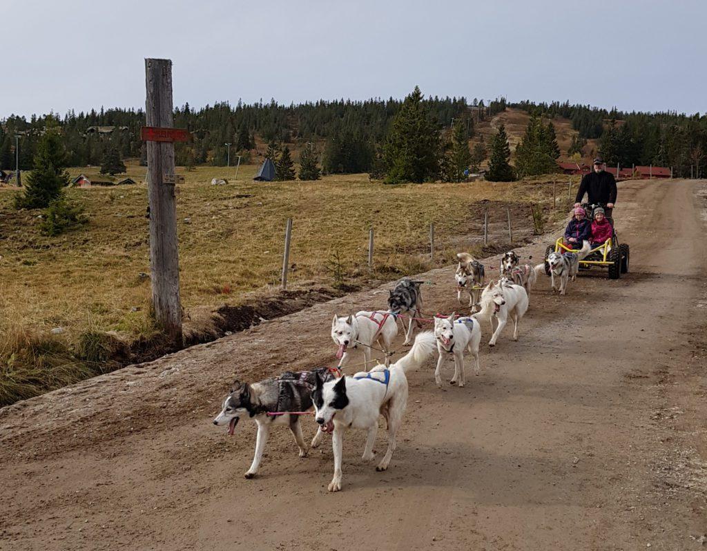 ET AV FLERE TILBUD: Under familiedagen på Budor blir det blant annet muligheter for å teste hundekjøring. Her fra en tidligere familiedag.